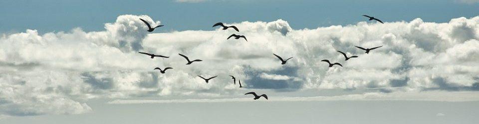 weblog spiritualiteit – zoeken vinden loslaten